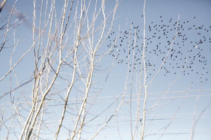 Birds overhead.