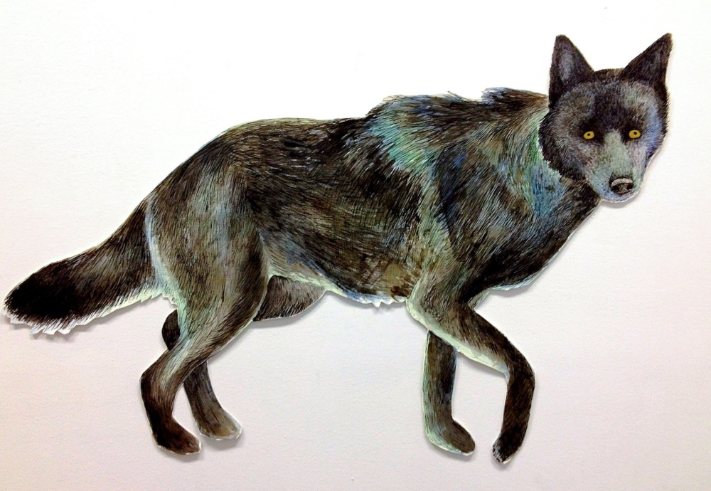 Mr Wolf close up.